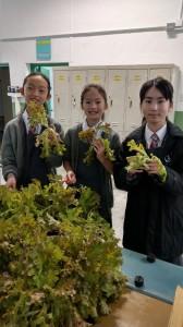 hydroponics class 2